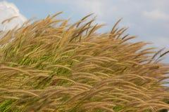 L'erba fiorisce in primavera Fotografie Stock Libere da Diritti
