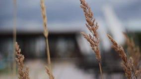 L'erba gialla fluttua in vento davanti alla stazione balneare moderna il giorno nuvoloso video d archivio