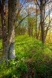 L'erba ha coperto la strada in foresta fotografia stock libera da diritti