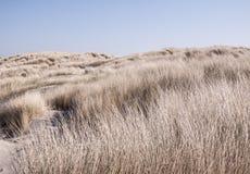 L'erba ha coperto le dune Immagine Stock