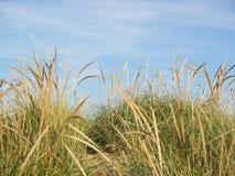 L'erba incontra il cielo Fotografie Stock Libere da Diritti