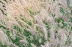 L'erba nel campo vicino al termine Immagine Stock Libera da Diritti
