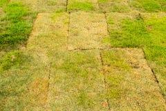 L'erba nel giardino Fotografie Stock