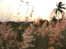 L'erba nel giardino Fotografia Stock Libera da Diritti