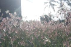 L'erba nel pomeriggio Fotografie Stock Libere da Diritti