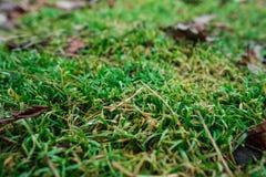 L'erba nella foresta Fotografia Stock Libera da Diritti