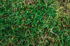 L'erba nella foresta Immagini Stock