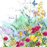 L'erba rurale del campo dell'estate fiorisce ed il fondo della farfalla Illustrazione dell'acquerello Fotografia Stock