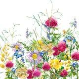 L'erba rurale del campo dell'estate fiorisce ed il fondo della farfalla Illustrazione dell'acquerello illustrazione di stock