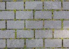 L'erba si sviluppa attraverso i precedenti di struttura del modello della tegola di cemento armato fotografie stock libere da diritti