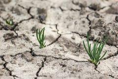 L'erba si sviluppa in su in terreno asciutto Immagine Stock