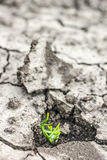 L'erba si sviluppa in su in terreno asciutto Fotografie Stock