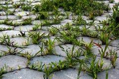 L'erba si sviluppa sulla pavimentazione Immagine di priorità bassa Immagine Stock Libera da Diritti