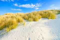 L'erba sulle dune di sabbia di bianco tira e cielo blu Fotografia Stock