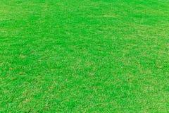 L'erba verde Fotografia Stock