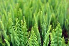 L'erba verde Fotografie Stock