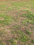 L'erba verde e l'erba asciutta con la mattina si accendono fotografie stock libere da diritti