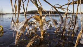 L'erba verde si è congelata nel ghiaccio bizzarro Fotografia Stock Libera da Diritti