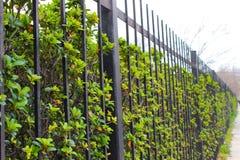 L'erba verde si sviluppa da fench Fotografia Stock