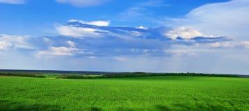 L'erba verde si sviluppa sul campo Fotografie Stock