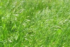 L'erba verde succosa dell'estate sull'europeo meravigliosamente ha offuscato il fondo Fotografia Stock Libera da Diritti