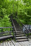 L'escalier dans la forêt Image libre de droits