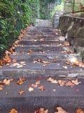 L'escalier de la propriété en automne est dangereux avec les feuilles mortes Images stock