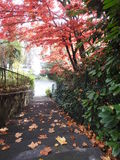 L'escalier de la propriété en automne est dangereux avec les feuilles mortes Image stock