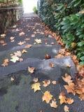 L'escalier de la propriété en automne est dangereux avec les feuilles mortes Image libre de droits
