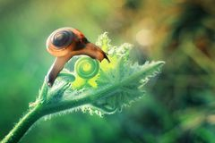 L'escargot photo stock