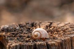 L'escargot Photographie stock