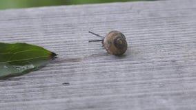 L'escargot clips vidéos