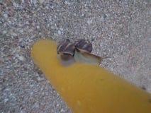 L'escargot a décidé de faire une promenade image stock
