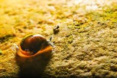 L'escargot de jardin Image libre de droits
