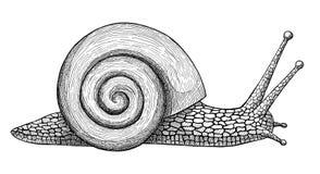 L'escargot de rampement, encrent l'illustration tirée par la main de vintage illustration libre de droits