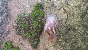 L'escargot mange tous photo stock