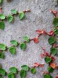 L'escargot part du vert de feuille Photo libre de droits