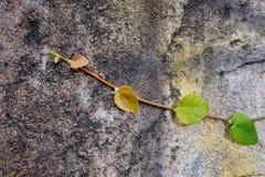 L'escargot part du vert de feuille Photographie stock libre de droits
