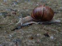 L'escargot rampe à son bonheur photographie stock libre de droits