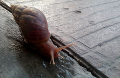 L'escargot rampe le matin Photos stock
