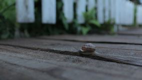 L'escargot rampe le soir banque de vidéos