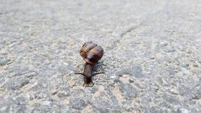 L'escargot rampe sur la roche Foyer s?lectif photos libres de droits