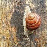 L'escargot se tient sur un morceau de bois humide photos libres de droits