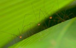 L'esercito 3 del ragno Immagini Stock Libere da Diritti