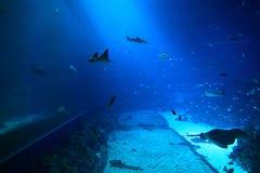 L'espèce marine dans l'aquarium Photographie stock libre de droits