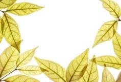 L'espace blanc de plan rapproché au centre du cadre par des feuilles de brun d'isolement sur le fond blanc Image libre de droits