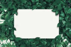 L'espace blanc qui est employé pour ajouter le texte qui a des feuilles comme fond photos libres de droits