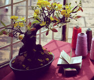 L'espace d'étude près de la fenêtre dans le printemps Photographie stock