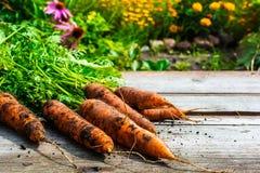L'espace libre sur la table et la carotte de moisson fraîche Photos libres de droits