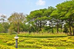 L'espace vert de jardin Photos libres de droits